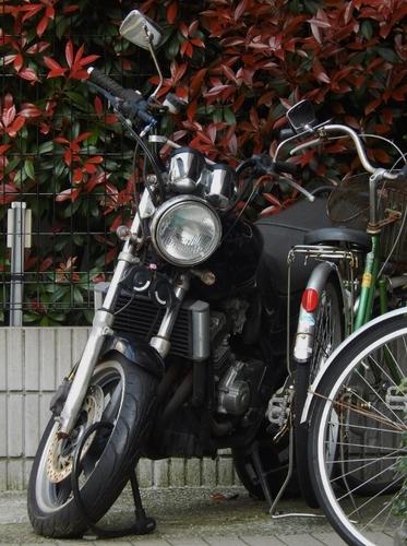 ホンダ(523x700).jpg