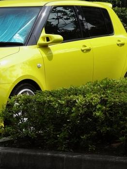 黄色(525x700).jpg