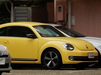黄色(700x523).jpg